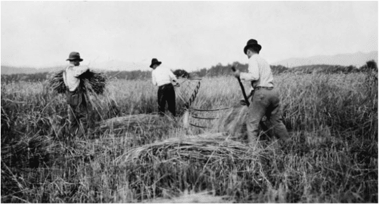 Harvesting has come a long way since the days when farmers had to cut down the plants with a scythe or cradle.